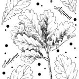 Hand drawn autumn leaves Stock Image