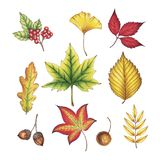 Hand Drawn Autumn Leaves royalty free stock photography