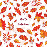 Hand drawn autumn leaves with text Hello autumn. Background with Fall leaves. Forest design elements. Hand drawn autumn leaves with text Hello autumn Stock Photos