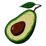Hand-drawn avocado on a white background. Vector illustration. stock image