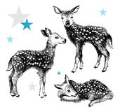 3 hand drawn baby deers in vintage style Royalty Free Stock Photography