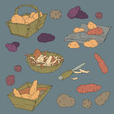 Hand drawn background illustration with potatoes Royalty Free Stock Photos
