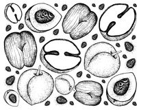 Hand Drawn Background of Peach and Double Coconut Fruits. Tropical Fruits, Illustration Wallpaper Background of Hand Drawn Sketch Peach, Nectarine or Runus Stock Images