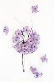 Hand drawn ballerina wearing dress made of natural hyacinth flowers Royalty Free Stock Photo