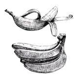 Hand drawn bananas Stock Photography