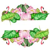 Hand drawn banner of watercolor flamingos,lotus flowers. On white backgroundn stock illustration