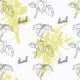 Hand drawn basil branch and handwritten sign Royalty Free Stock Photos