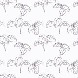 Hand drawn basil branch outline seamless pattern Royalty Free Stock Photos