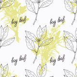 Hand drawn bay leaf branch and handwritten sign Stock Image