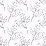 Hand drawn bay leaf and branch outline seamless Royalty Free Stock Images