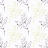 Hand drawn bay leaf and branch stylized  Royalty Free Stock Image