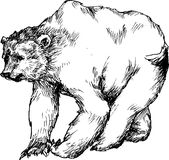 Hand drawn bear Royalty Free Stock Images