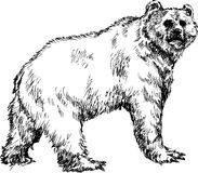 Hand drawn bear Royalty Free Stock Photo
