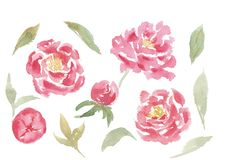 Hand drawn watercolor set of peony flowers and leaves royalty free illustration