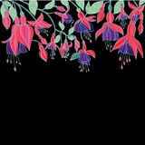 Hand drawn Beauty Floral texture with Fuchsia flowers Stock Images