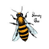 Hand drawn bee Royalty Free Stock Photos