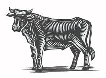 Hand drawn beef Royalty Free Stock Photo