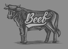 Hand drawn beef Royalty Free Stock Images