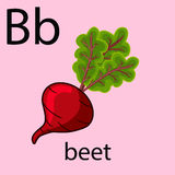 Hand drawn beet illustration. Over light background like element of alphabet Stock Photography