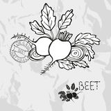 Hand drawn beet Royalty Free Stock Image