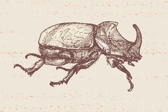 Hand drawn beetle Stock Photo