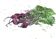 Hand drawn beets Royalty Free Stock Photos