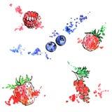 Hand drawn berries Stock Photography
