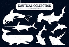 Hand drawn big fish icons set. Hand drawn nautical collection of fish and sea inhabitants on black background. Dolphin, white shark, killer whale, cachalot Stock Photo