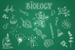 Hand drawn Biology set. Chalk on the blackboard Royalty Free Stock Photo