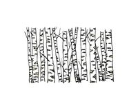 Hand drawn birch tree trunks stock illustration