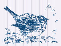 Hand drawn bird. On background of notebook Stock Images