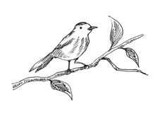 Hand drawn bird. Beautiful hand drawn line of bird on the tree branch Stock Photos
