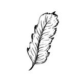 Hand drawn bird feather, Symbol of knowledge, writing and learning. Vector black and white illustration in vintage style Stock Photography