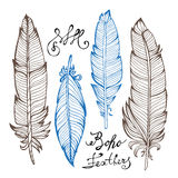 Hand drawn bird feathers closeup  on white Stock Images