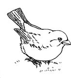 Hand Drawn Bird Stock Image