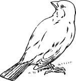 Hand Drawn Bird Royalty Free Stock Photos
