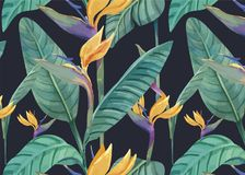 Hand drawn bird of paradise pattern Royalty Free Stock Images