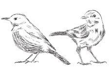 Hand drawn bird Vector Illustrations Stock Photos