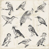 Hand drawn Birds Royalty Free Stock Images