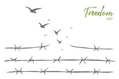 Hand drawn birds flying over broken barbed wire. Vector hand drawn freedom concept sketch with broken barbed wire and flock of birds flying over it Stock Photos