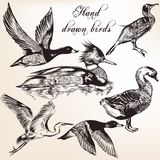 Hand drawn birds set for design Stock Photography
