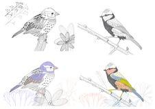 Hand drawn birds Royalty Free Stock Photos
