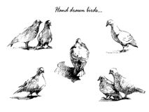 Hand drawn birds on white background. vector illustration