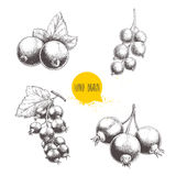 Hand drawn black currant sketch set. Black currants bunch with leaves. Forest berries illustrations. Royalty Free Stock Photo