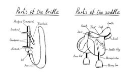 Parts of a saddle and bridle, .  The terms of the equestrian equipment. Stock Image