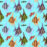 Angelfishes, Fancy Hi-fin Swordtai and Dwarf pencilfish. Hand drawn black outline colorful illustration, seamless pattern design on blue water background Stock Image