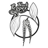 Hand drawn black pepper, spicy ingredient, black pepper logo, healthy organic food, spice black pepper on white background. Culinary herbs, label, food vector illustration