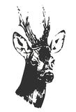 Hand drawn black and white buck silhouette, vector, illustration. Print for t-shirts Stock Photo