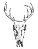 Hand drawn black and white deer scull Royalty Free Stock Photo