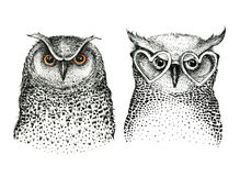 Hand drawn black white illustration owl fly bird. Art Coloring Royalty Free Stock Images